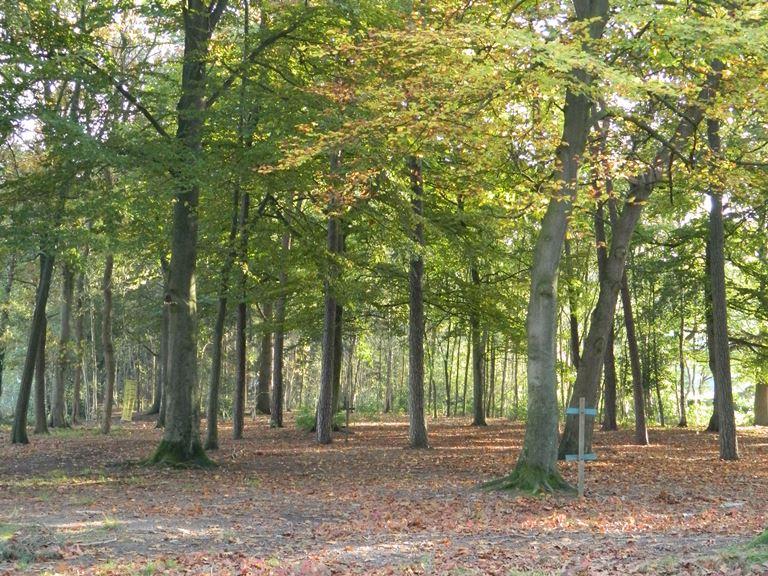 Groot Dennenlust bos