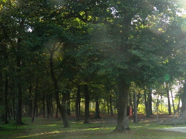 Groot Dennenlust ander bos