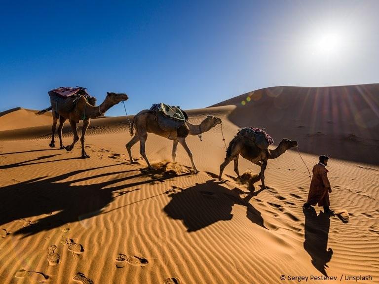 kamelen in de Arabische wereld